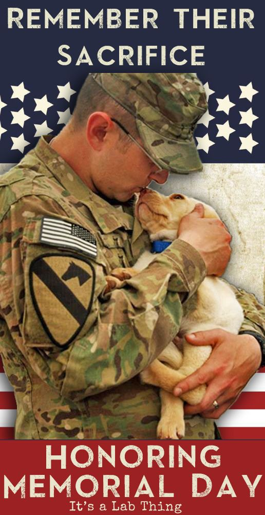 Image result for dog memorial day its a lab thing to do