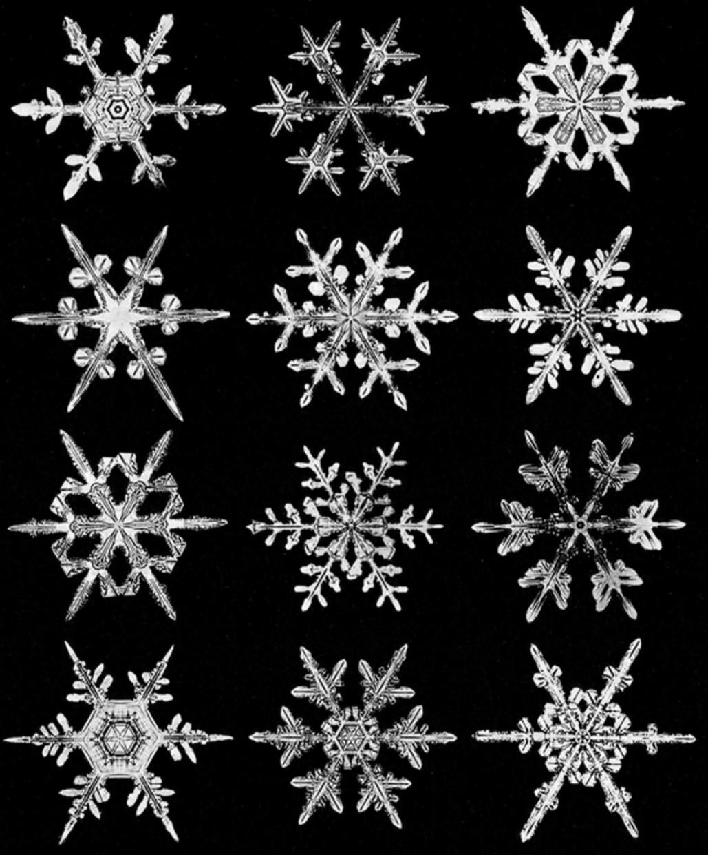 wilsonbentley_snowflakes22.jpg