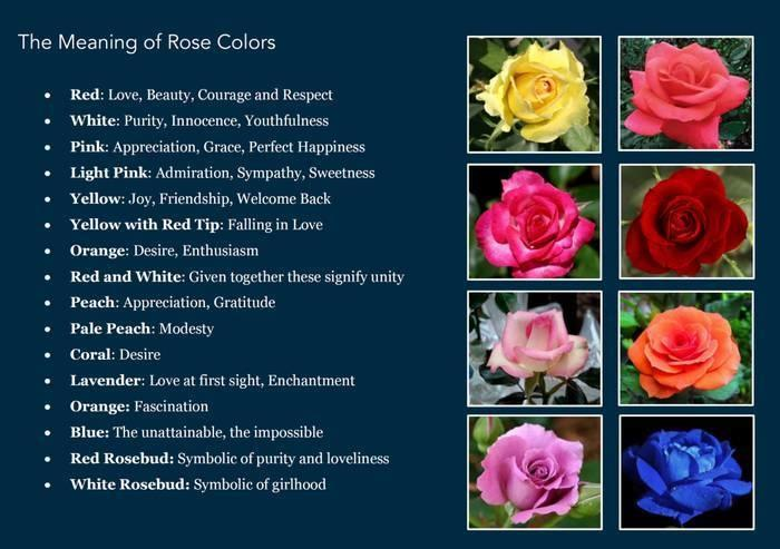 The Meaning Of Roses