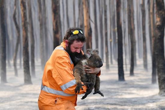 حرائق الغابات الاسترالية