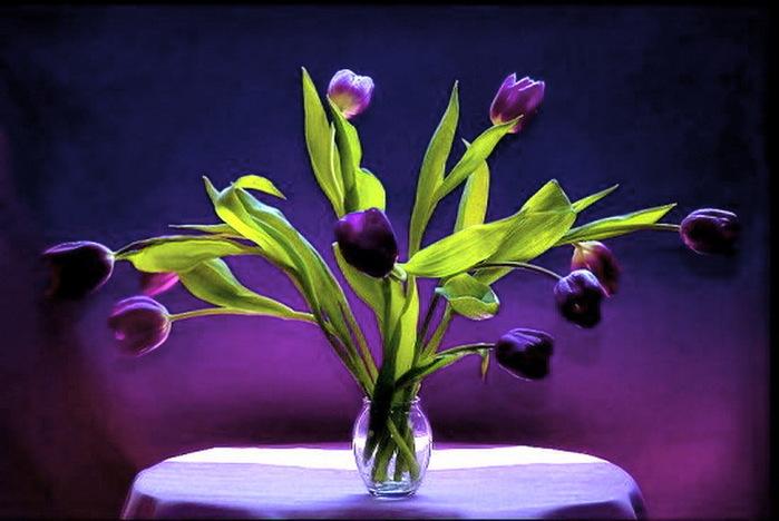 142617434_purple_springstill_life_drape_vase_greenrBgN (699x468, 220Kb)