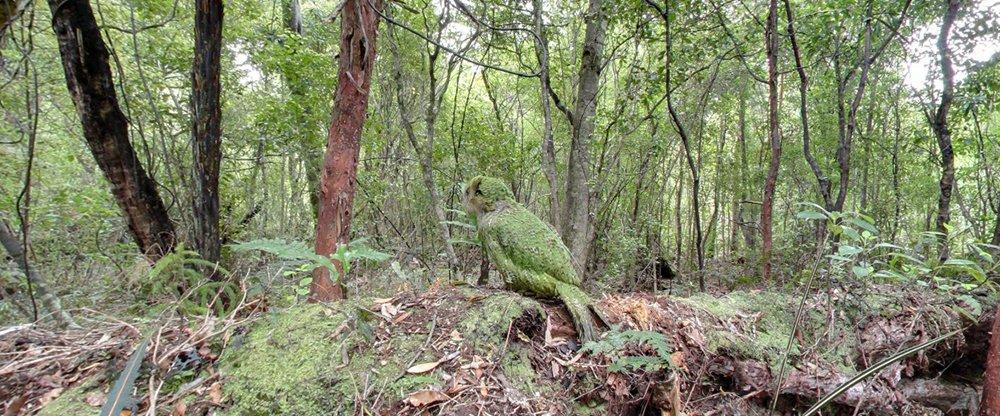 10_kakapo.jpg