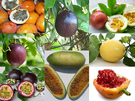 M-Tech Gardens Rare Passion fruit Exotic Varieties | (Yellow Honey  Passion-Fruit) | 1 Live Plant in Polybag : Amazon.in: Garden & Outdoors