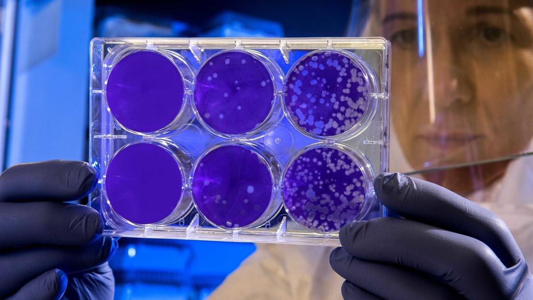 Creación de la vacuna por el COVID-19