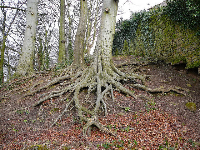 Image result for picture of roots of a tree