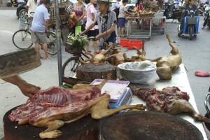 Lara Trump: Broad coalition forming to close China's bat, cat, and dog meat markets