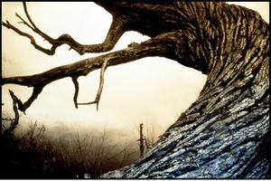 «Sleepy Hollow», de Tim Burton (1999).
