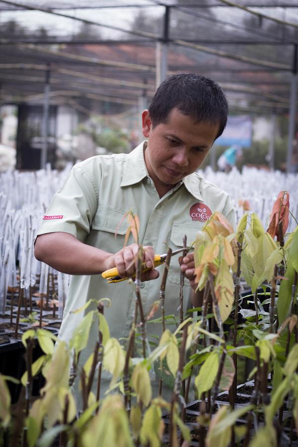 """Van Houten Professional kelak menjadi merek mass market pertama di Indonesia yang menawarkan kakao yang dipasok secara berkelanjutan dalam program """"Cocoa Horizons"""". Program tersebut meningkatkan mata pencaharian para petani kakao dan komunitas mereka di sejumlah wilayah, seperti Sulawesi"""