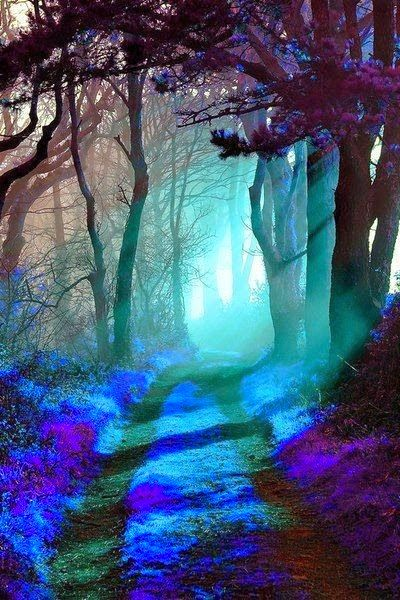 Mystic forest: