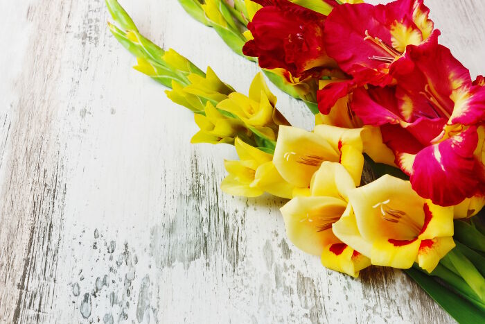 Gladiolus - the Perfect Gift for an August Birthday | Gifts in Dubai