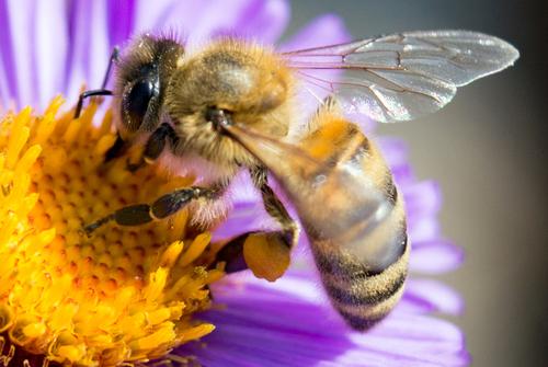 Bild von Biene auf einer Blume