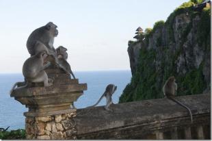 Monkeys at Uluwatu Temple, Bali