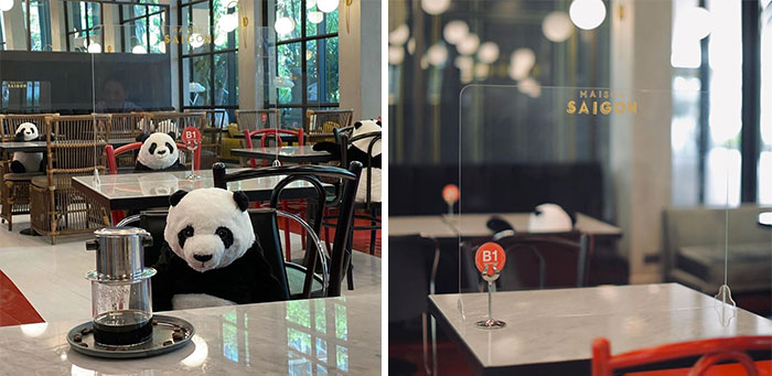 Maison Saigon Placed Plush Pandas In The Restaurant So That People Have To Sit At A Safe Distance