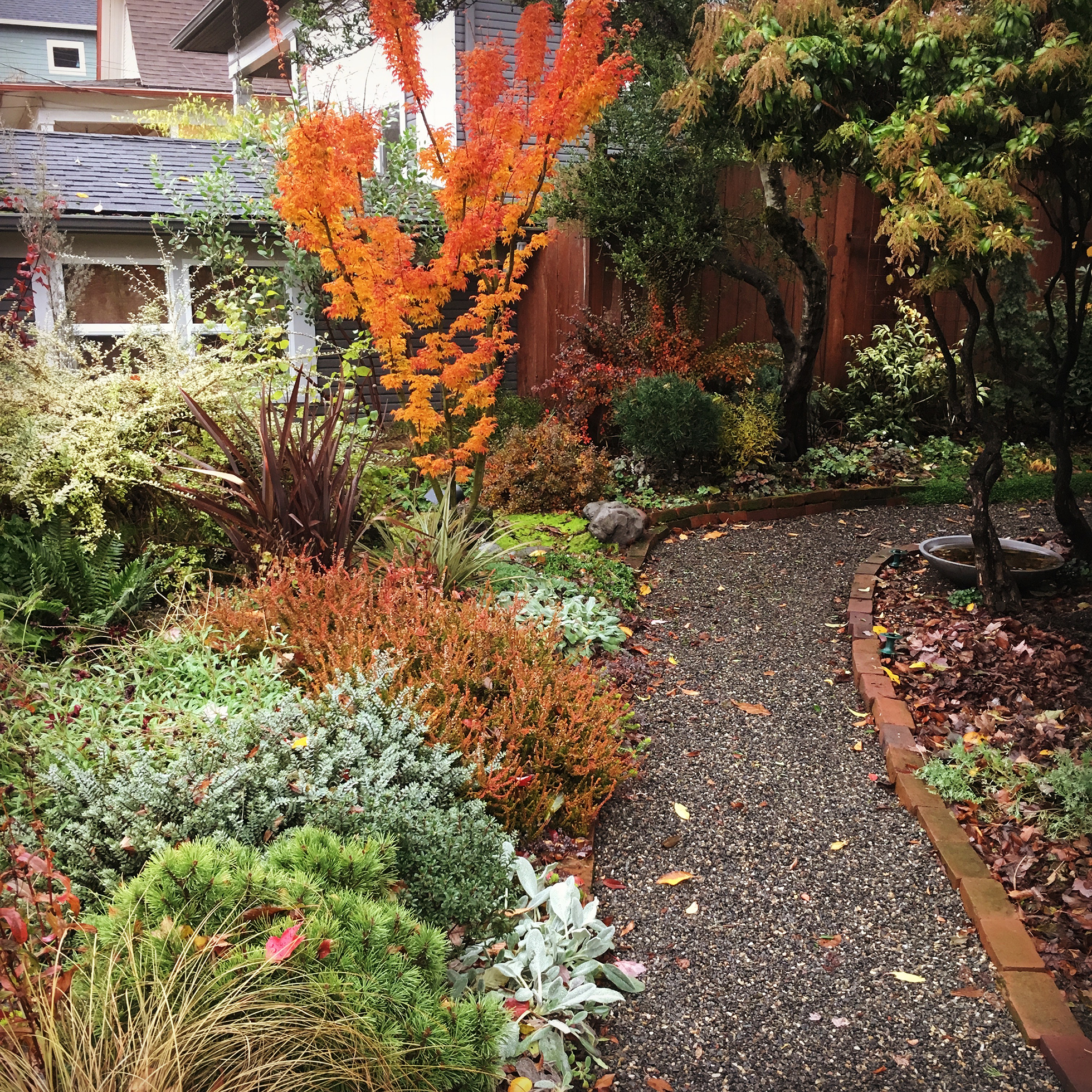 Garden path lined with bushes alive with fall colors