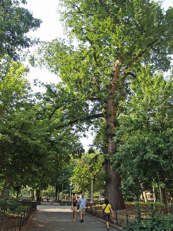 cây cổ thụ, báu vật