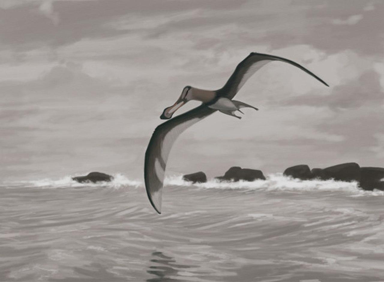 Winged Creature