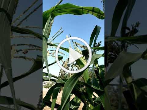 Growing Food with Heirloom Seeds & Bees