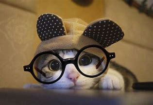 Image result for Cats Wearing Glasses