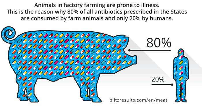 Infographic Antibiotics for Livestock
