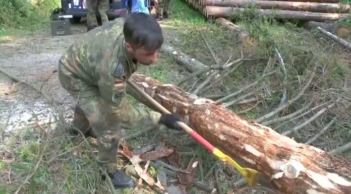 Quân đội Đức chiến đấu chống… bọ đục vỏ cây