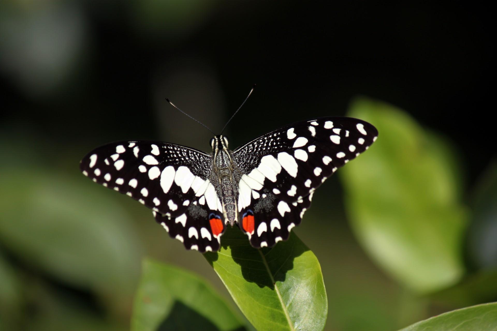 Papillon gros plan sur le congé
