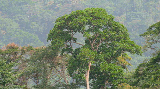 Regenwald am Afi Mountain