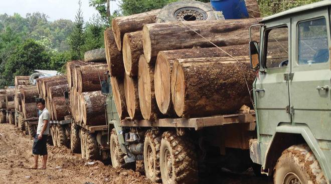 Holzstämme auf Lastwagen in Myanmar