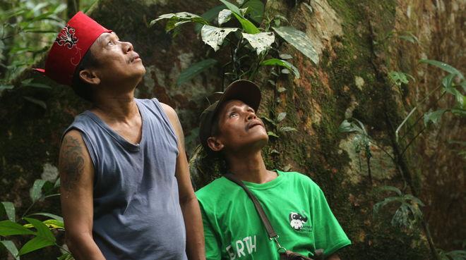 Indigene Dayak Tomun im Kinipan-Wald