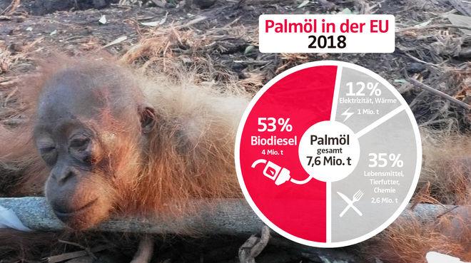 Collage - Palmölverwendung EU 2018 mit Gefesseltes Orang-Utan-Baby - DE