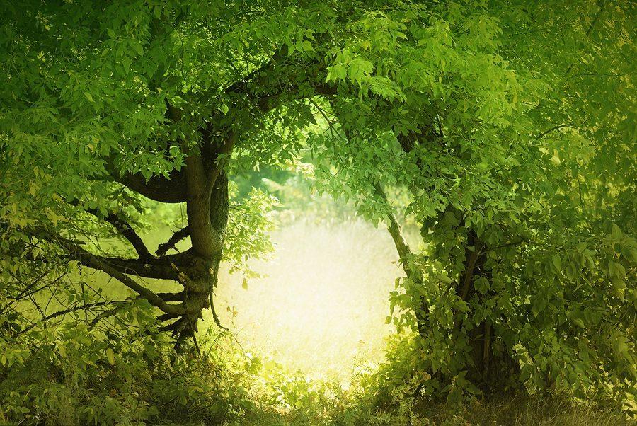 bigstock-Door-To-The-Fairy-Land-13987901