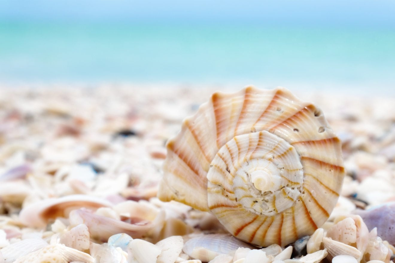 Spiral seashell on the beach with turquoise water in background