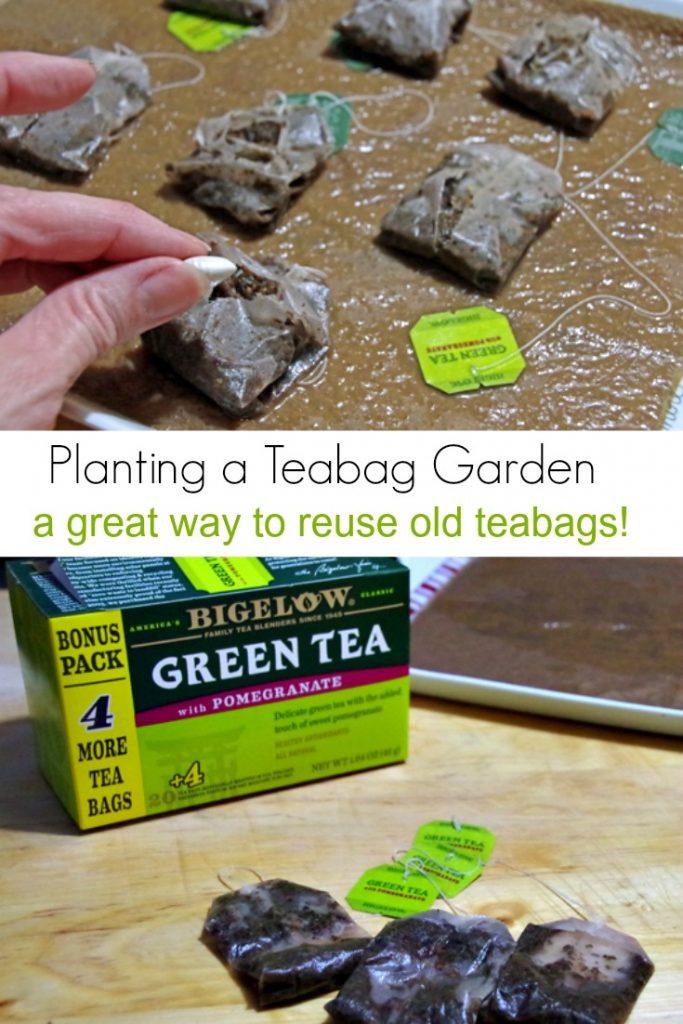How to Plant a Teabag Garden